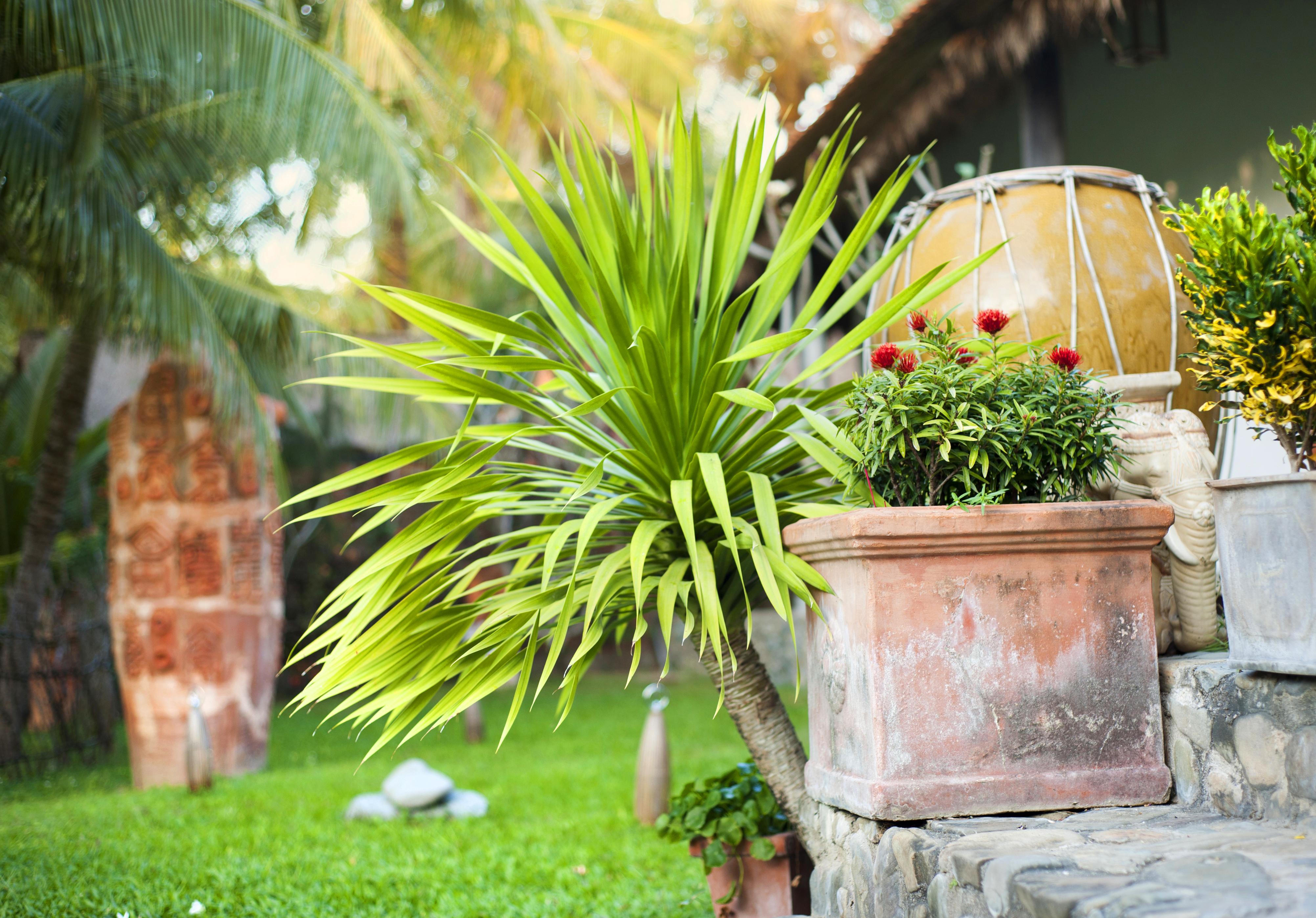 Green tropical garden